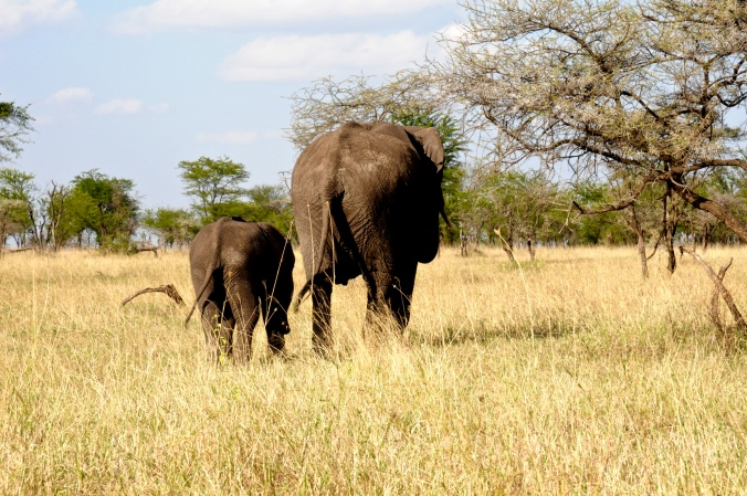 What to expect from a Tanzanian Safari